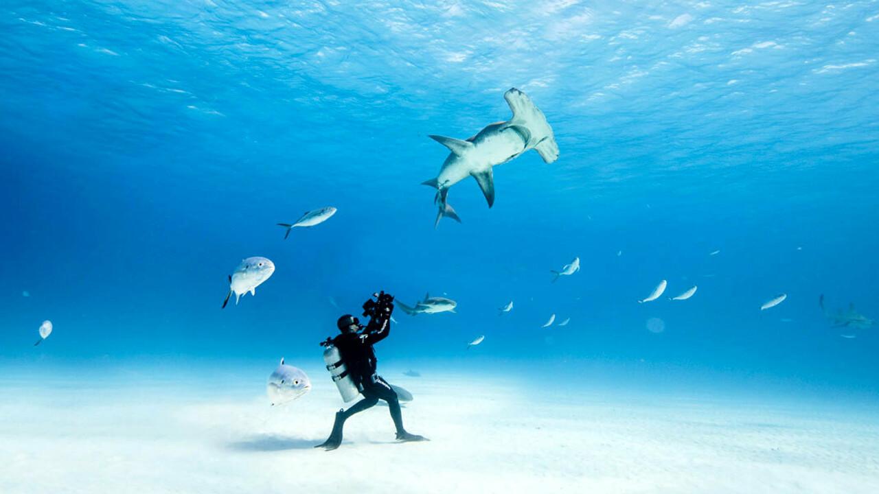 Ocean Film Festival thumbnail